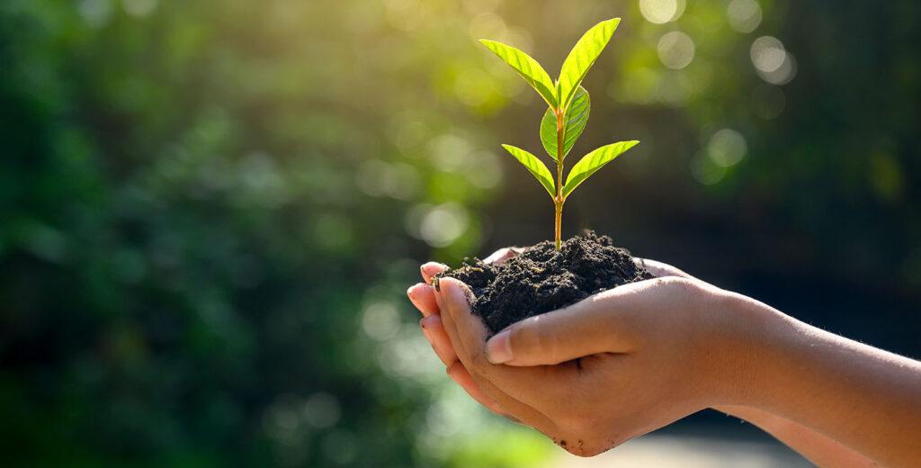 Líderes en la emisión de bonos sostenibles