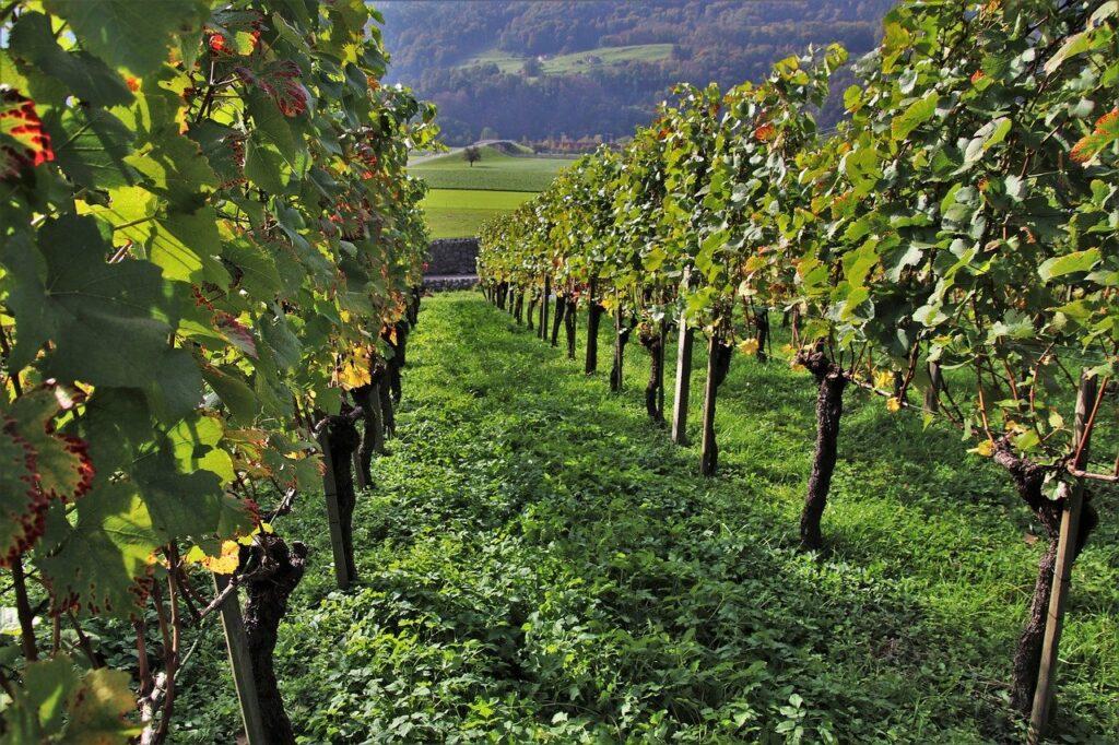 Las exportaciones de vino en España y en Navarra